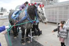 200102 ばん馬とのふれあい-03