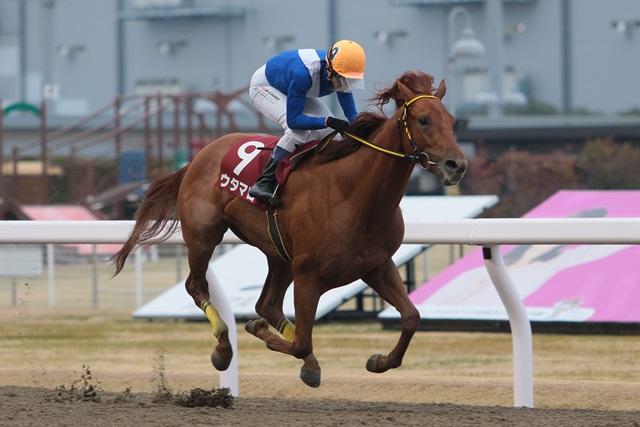 200304 東京中日スポーツ椿賞(クラウンカップトライアル)-01 優勝はウタマロ