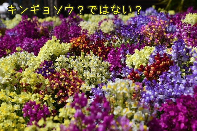 d-D75_4904.jpg