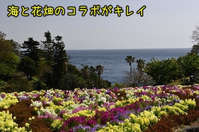 d-D75_4945.jpg