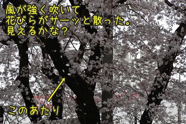 d-D75_5055.jpg