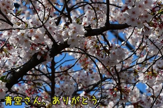d-D75_5080.jpg