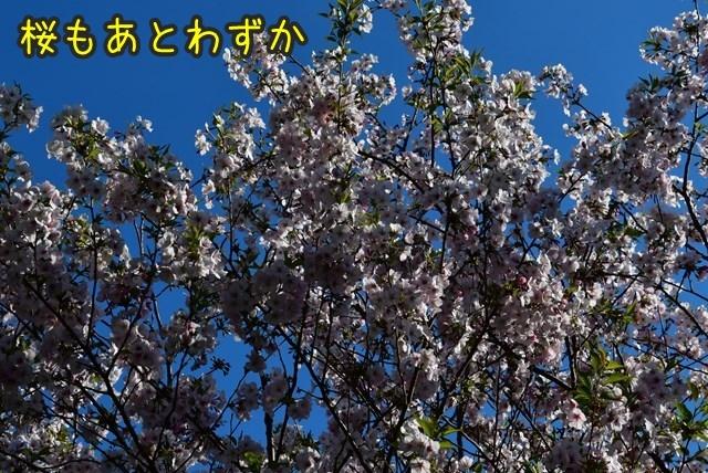 d-D75_5203.jpg