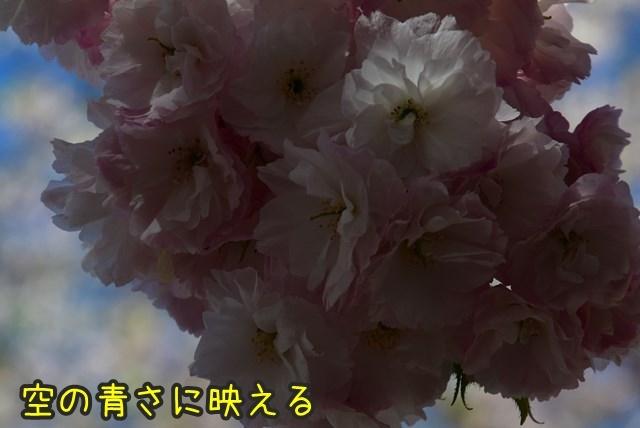 d-D75_5266.jpg
