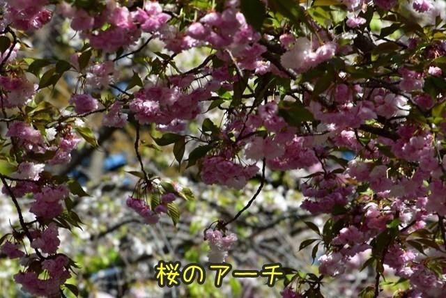 d-D75_5268.jpg