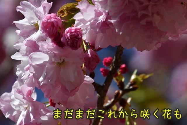 d-D75_5269.jpg