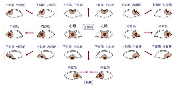外眼筋の動き
