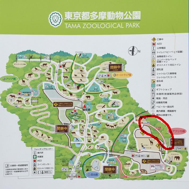 多摩動物公園16
