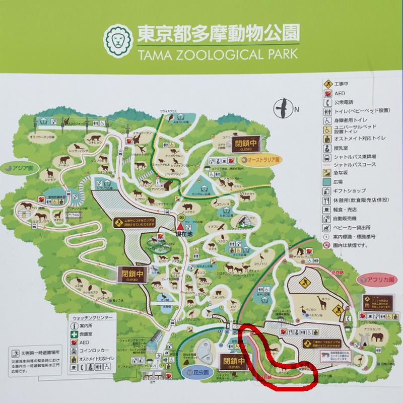 多摩動物公園17