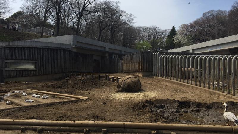 多摩動物公園18
