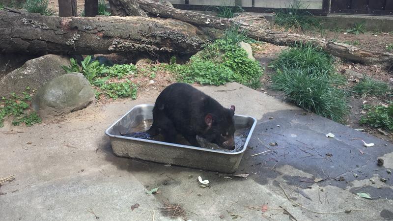 多摩動物公園23
