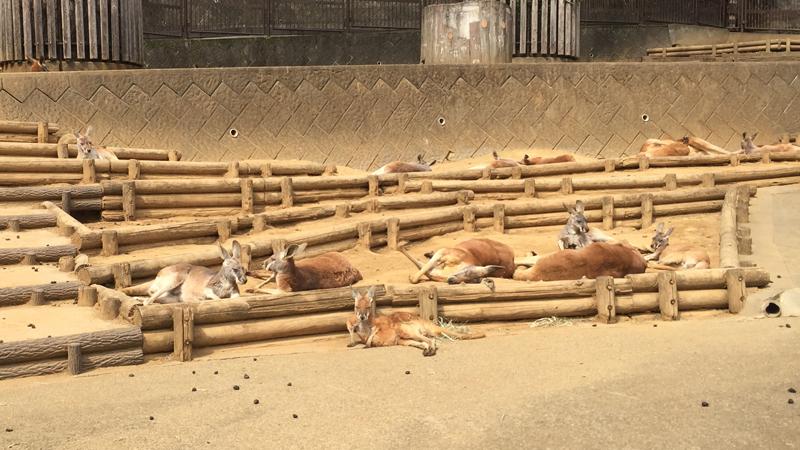 多摩動物公園29