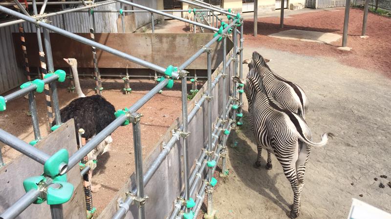 多摩動物公園31