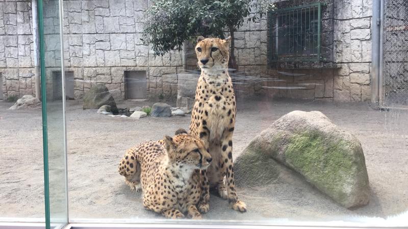 多摩動物公園53