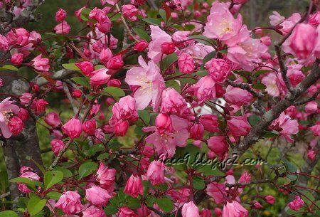 桜ではなく バラ科の花のようです。 1