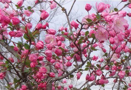 桜ではなく バラ科の花のようです。 2