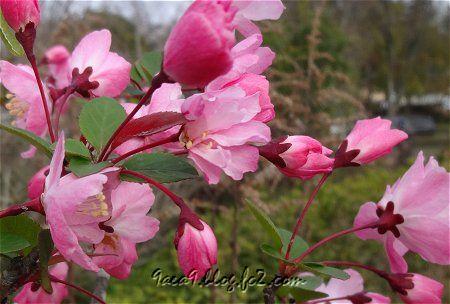 桜ではなく バラ科の花のようです。 3