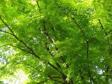見る人に感動を与える新緑パワー2