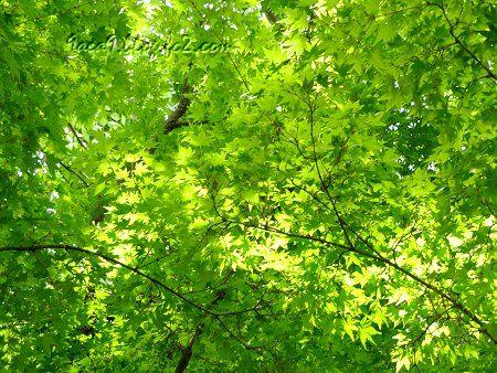 見る人に感動を与える新緑パワー3