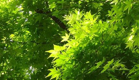 新緑の候 って