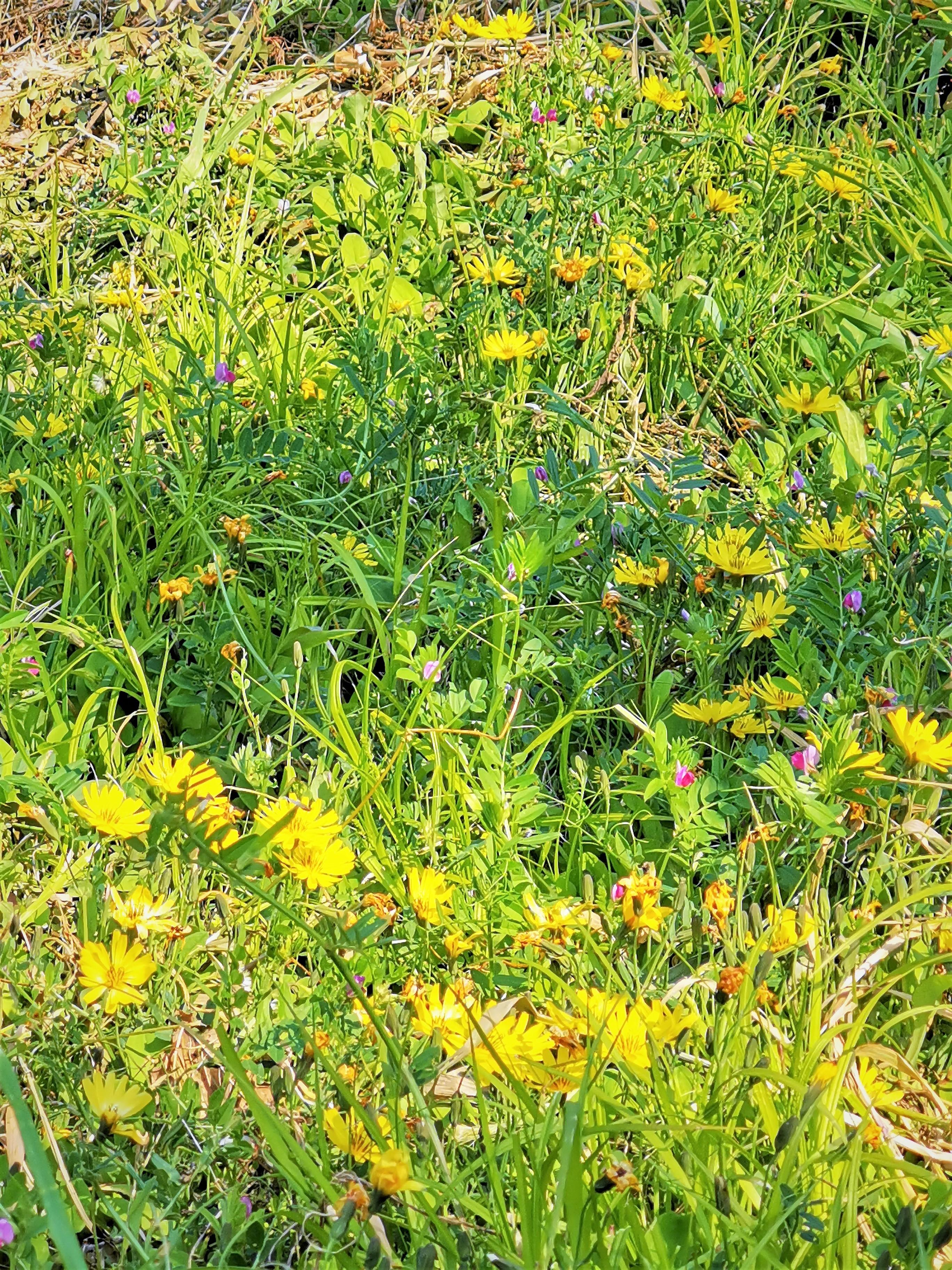 野に咲く花*