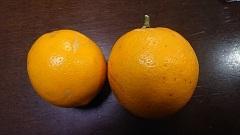0117レモン