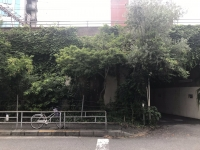 JR添いの植栽2