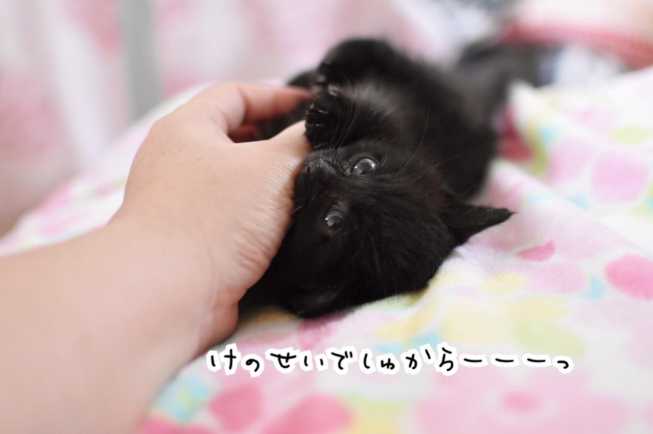 fc2blog_2020051514345973a.jpg