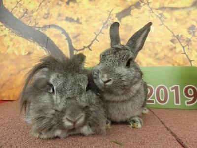 マリーとクレオ202001