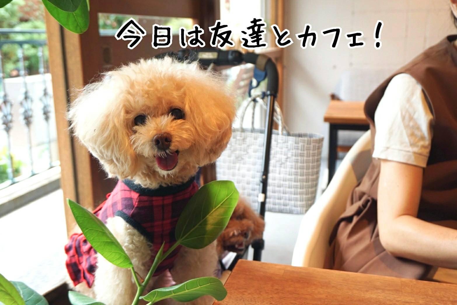 ポムちゃんとカフェ11
