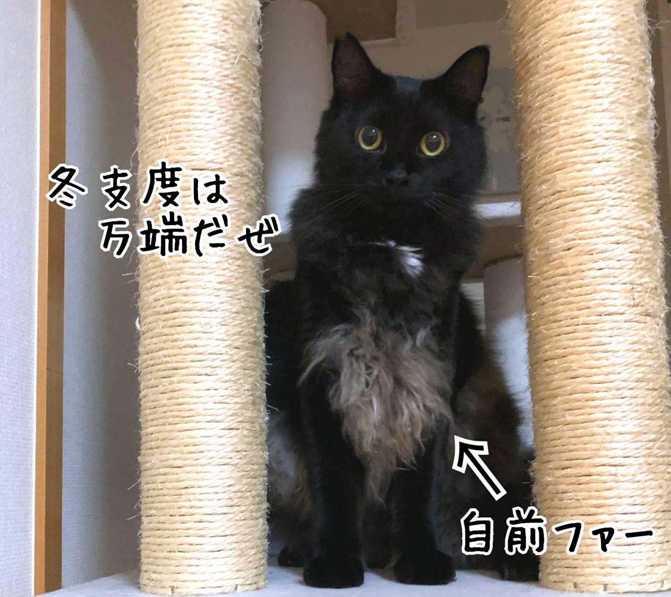 まるちゃん銀ちゃん11