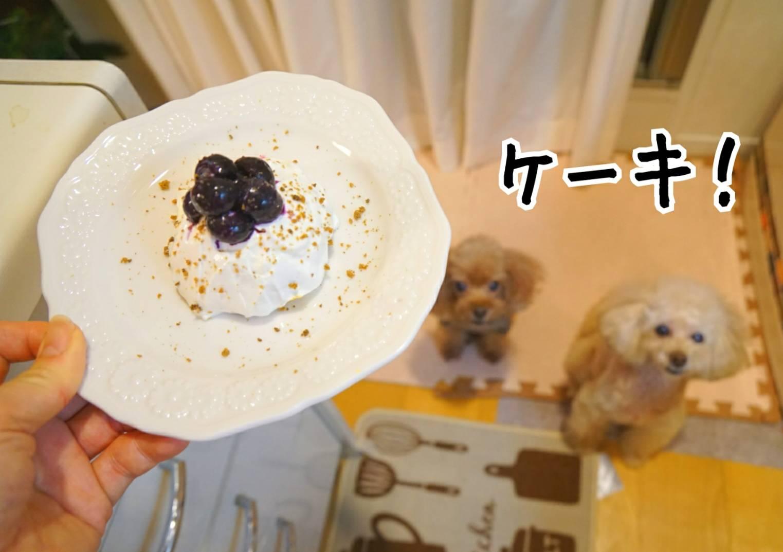 キラリのケーキ前編12