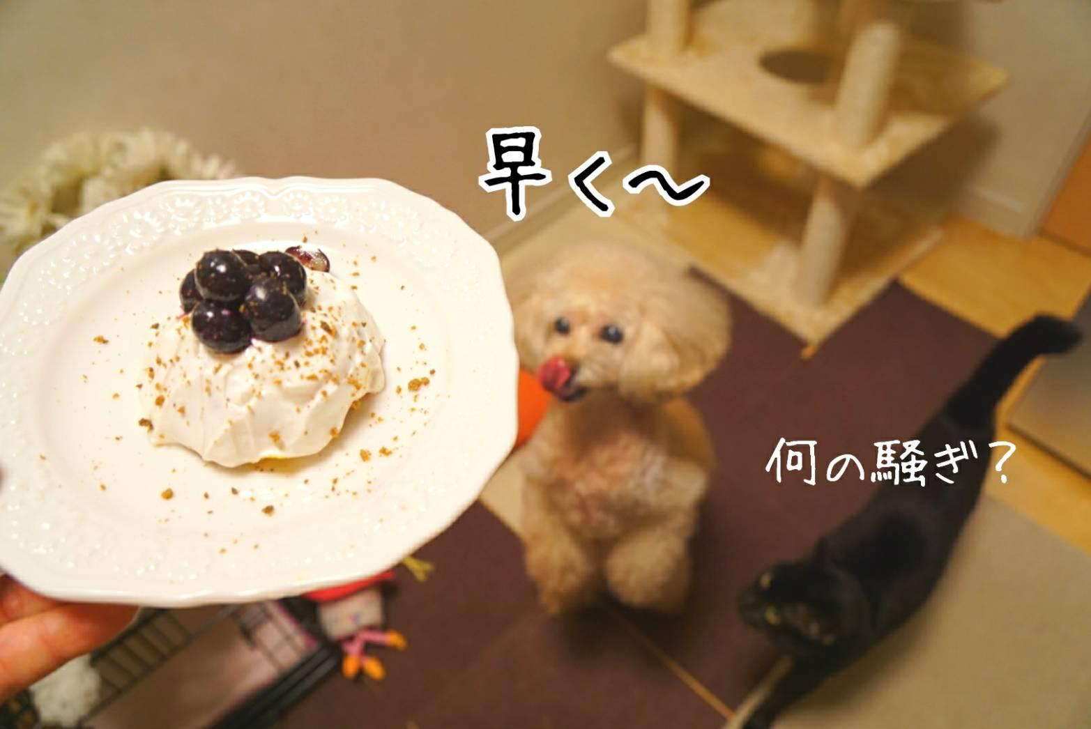 キラリのケーキ前編13