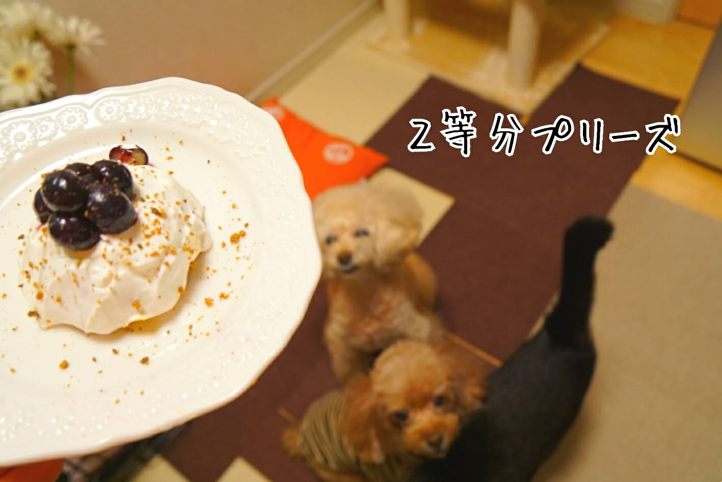 キラリのケーキ前編14
