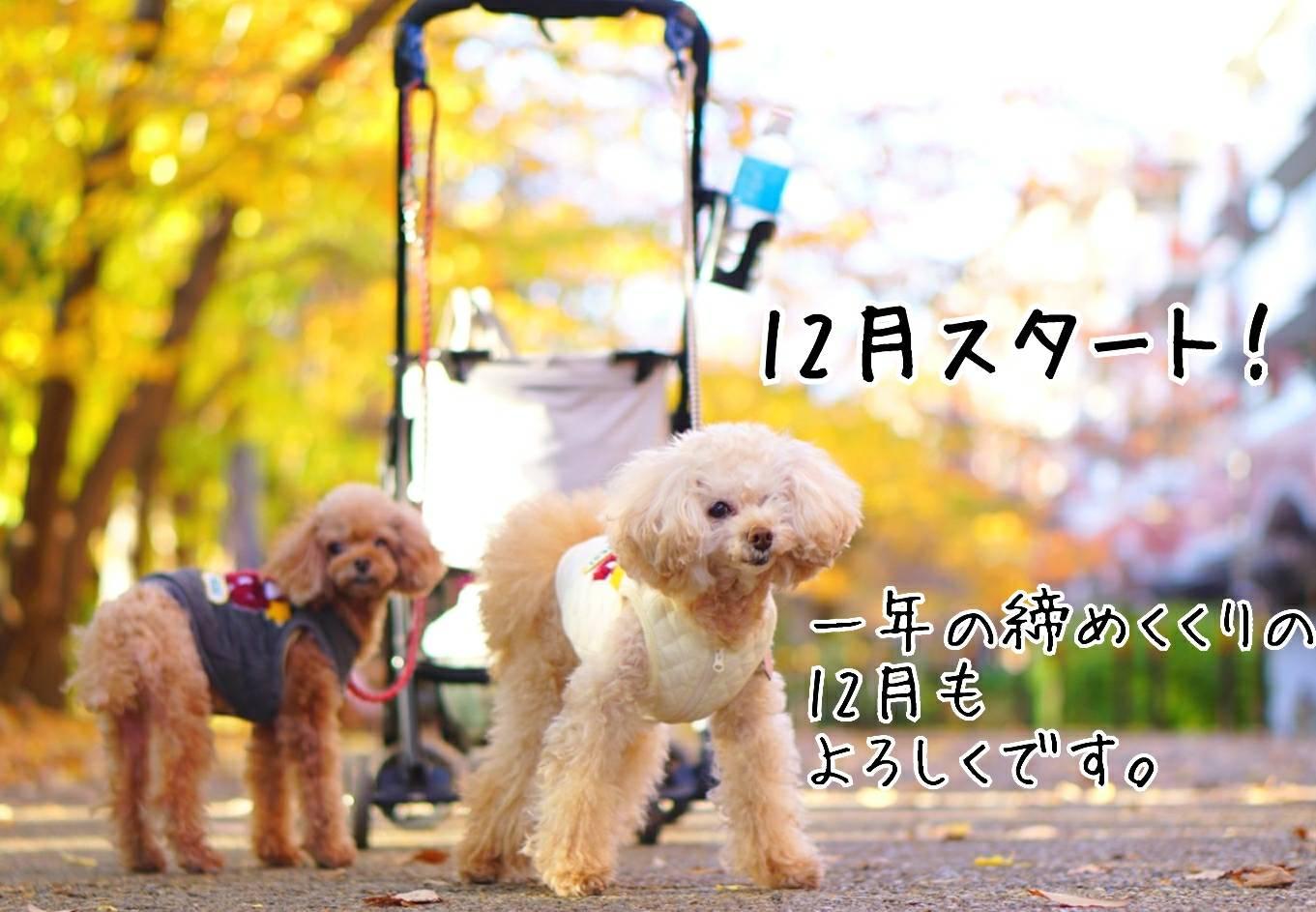 秋んぽ16