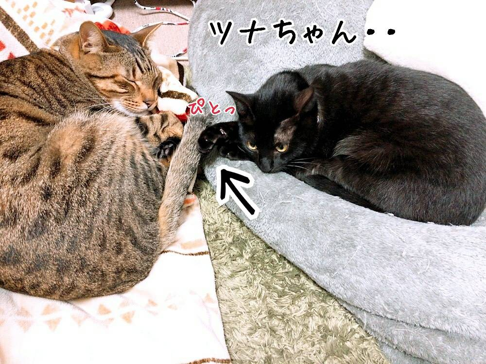 ジジトライアル経過13