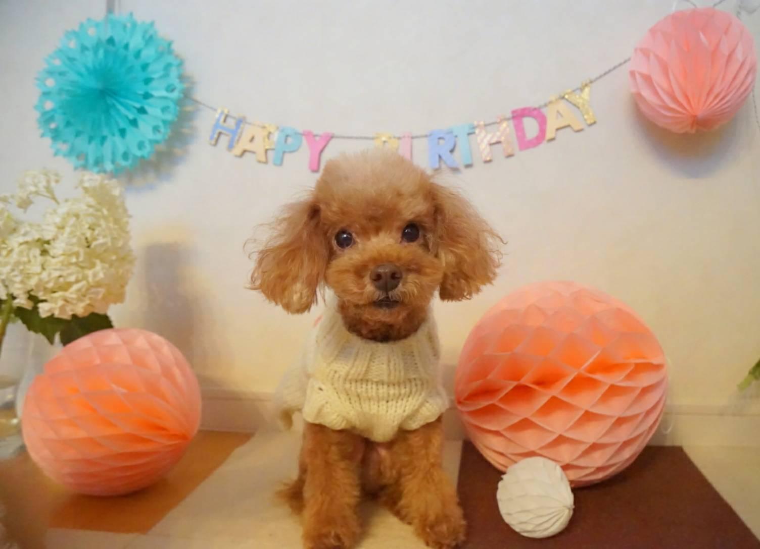 アリア9歳の誕生日17