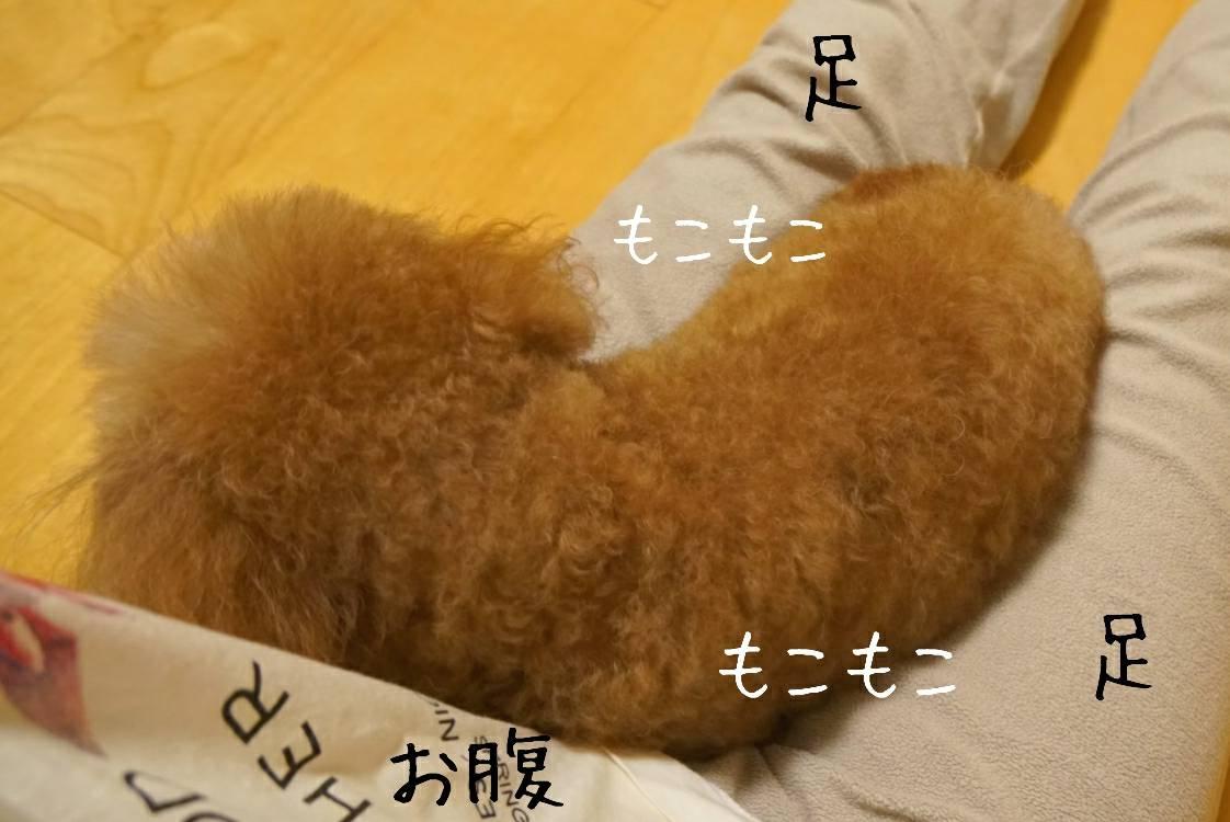 癒しのアリア11