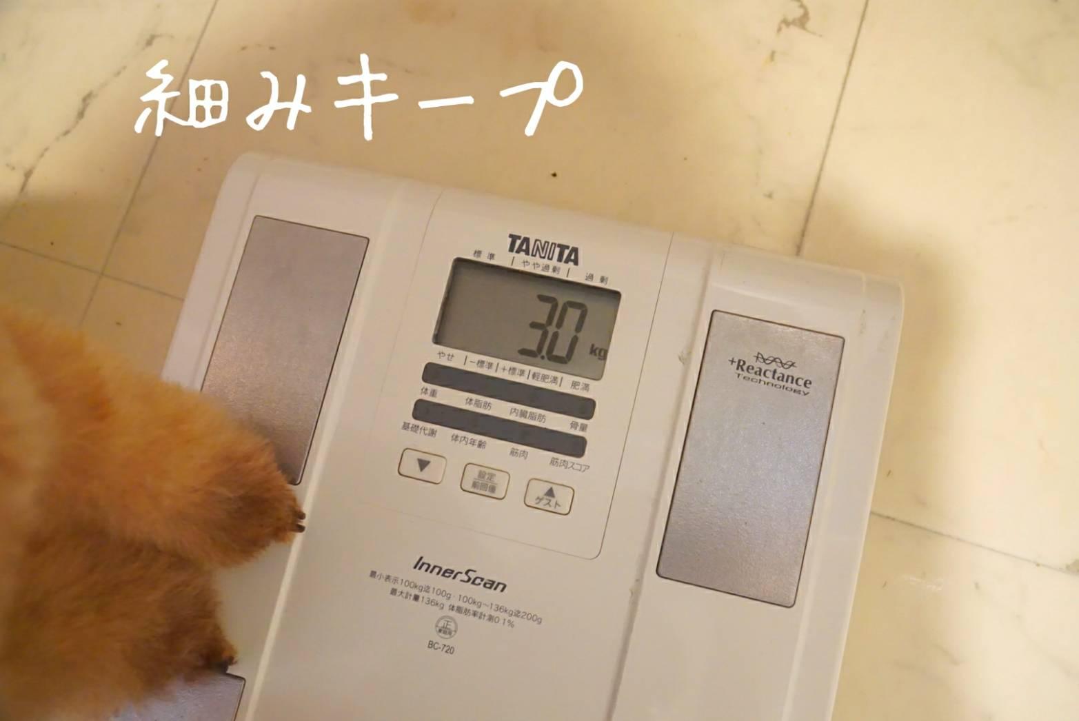体重測定アリア16
