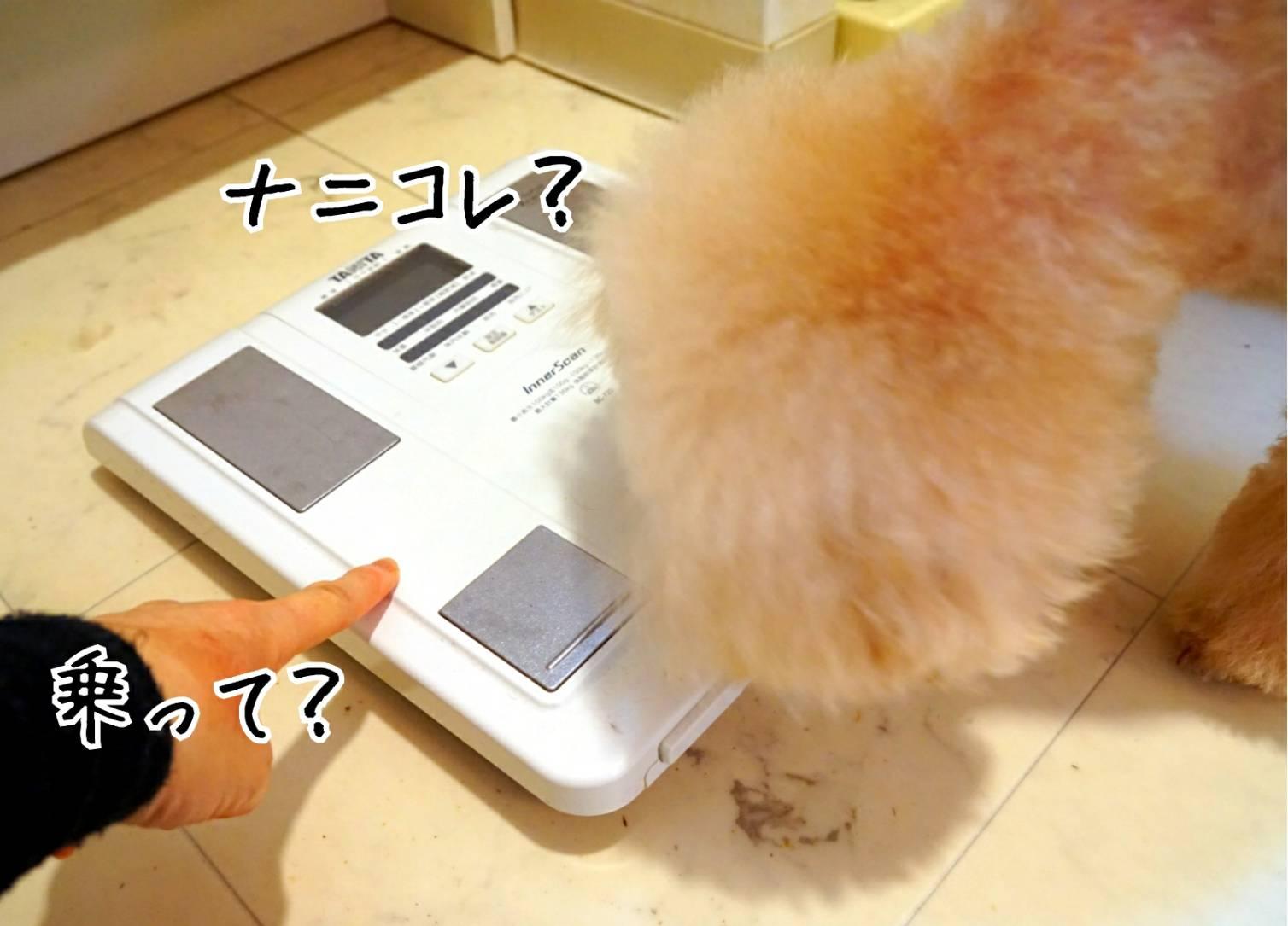 体重測定キラリ11