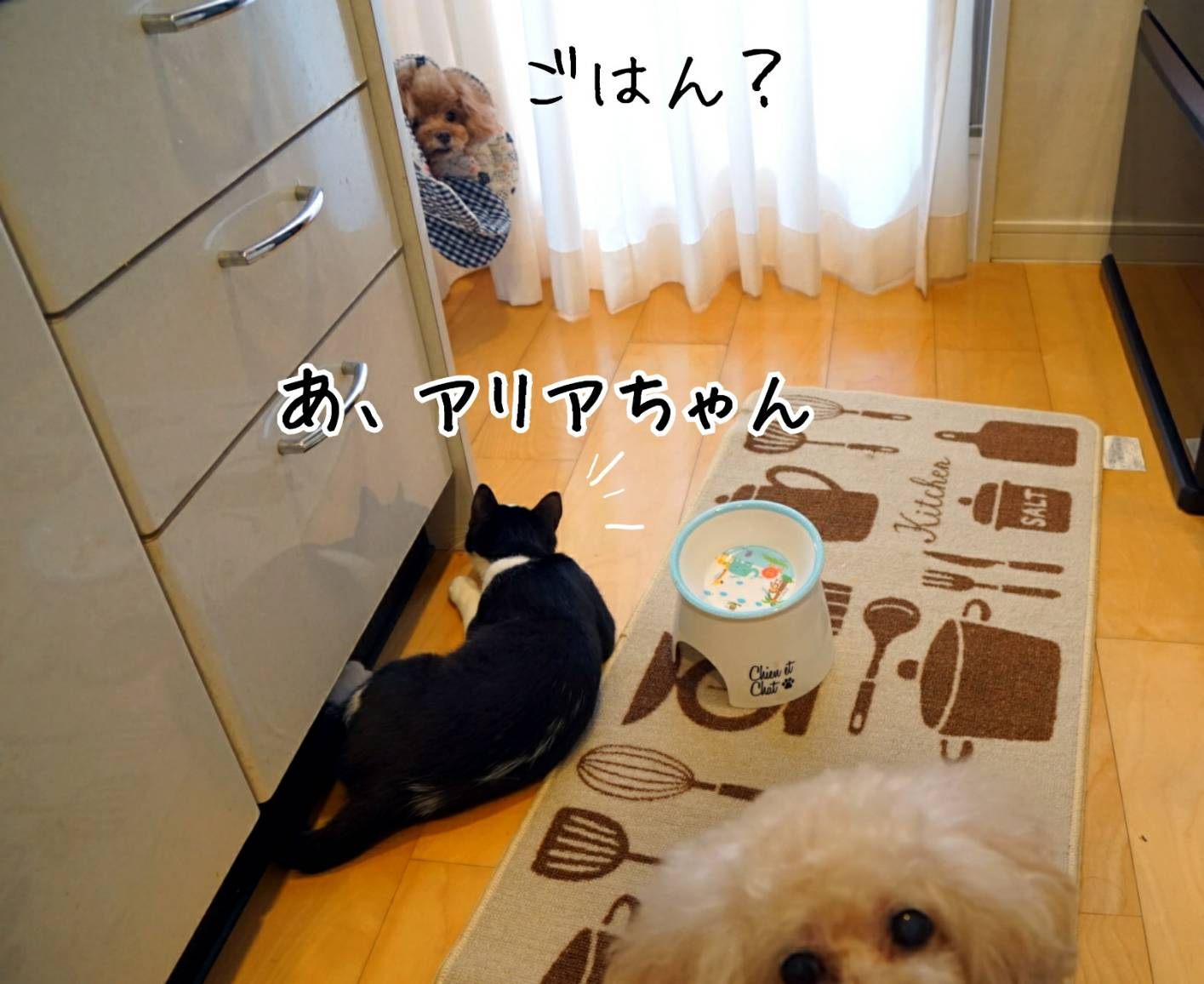 キッチンにももがいる風景14