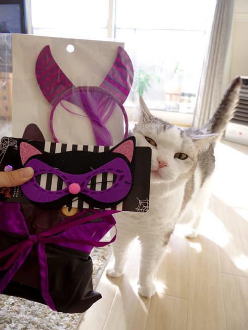 猫にもハロウィン衣装