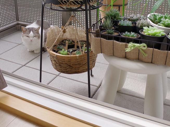 季節を先取りする猫