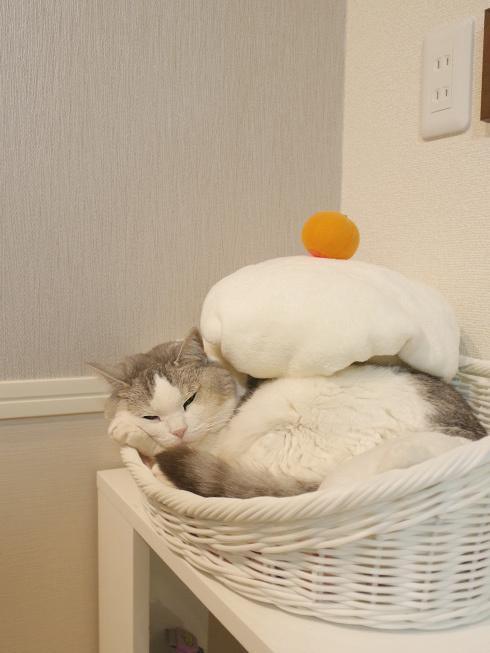 大晦日の猫