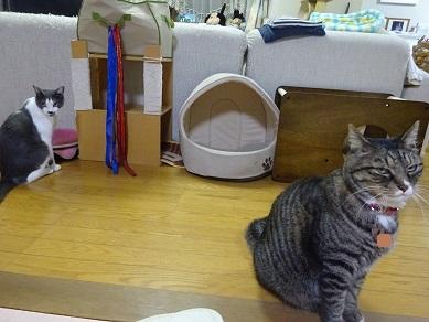猫のハンモックベッド