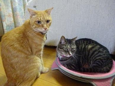 トラちゃんとライちゃん