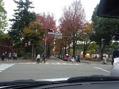 広阪通のアメリカ楓