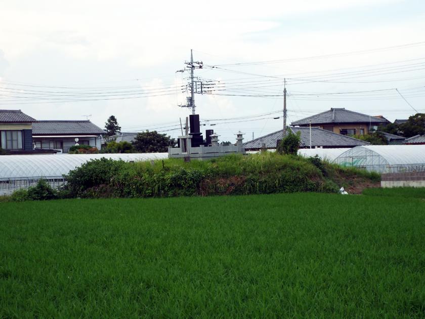 midori83sw.jpg