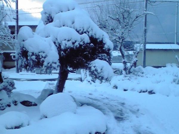 本格的な雪1