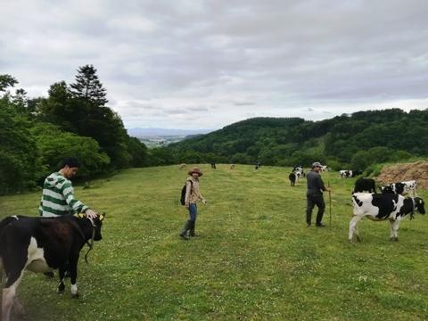 牛追い体験2019-3